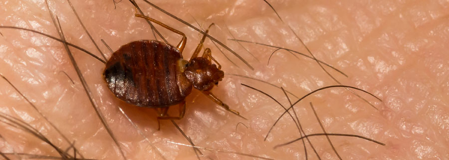 Bed Bugs problem in Vancouver