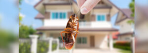 Pest Control Coquitlam